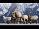 Alberta Canada - Banff Frozen in Time in 4K! DEVINSUPERTRAMP