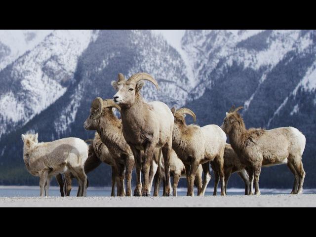 Alberta Canada - Banff Frozen in Time in 4K! | DEVINSUPERTRAMP