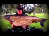 Graskarper, Graskarpfen, Amour Blanc, 29,1 kg 25,2kg 7 x 20kg+ Danny Wilschut &amp Michel vd Drift