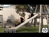 ТОП 10_ ПАНДЫ на ГОРКЕ_)) НЕРЕАЛЬНО СМЕШНО! Смешные панды