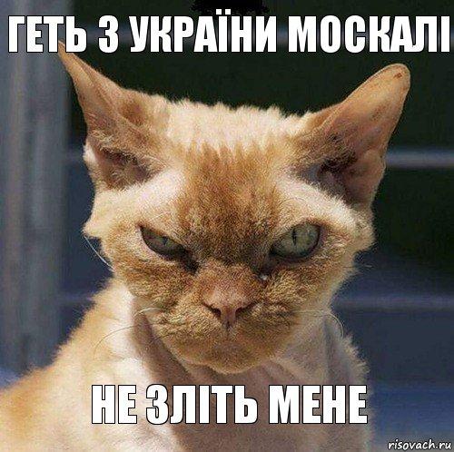 """На Донбассе задержан боевик, который """"отбился"""" от своей диверсионной группы, - СБУ - Цензор.НЕТ 9643"""