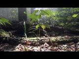 Spirits of Nature HD(The American Dollar - Equinox )