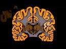 Анатомия полушарий большого мозга
