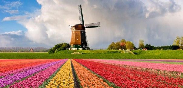 Hollanda Şirketleri Listesi Hollanda Şirket Adları
