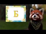 Учим букву Б алфавита с енотом Тимой