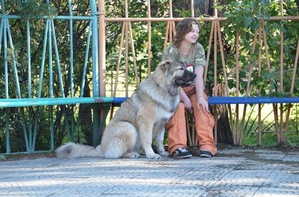 Школа дрессировки Алекса Вяткина в Байкальском регионе - Страница 3 HiSQowABMlI