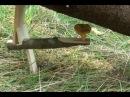 Уроки выживания в лесу ловушка 3