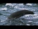 Zoo Brazil feat. Rasmus Kellerman - There Is Hope [HD]