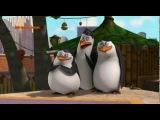 Pingwiny z Madagaskaru sezon 2 Odcinek 49, 50 - Mały Ptaszek, Boa Mściciel Dubling pl