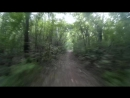 Cycling through the woods 2