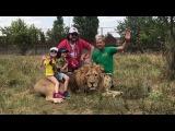 Филипп Киркоров делает селфи с детьми и львом. Парк львов Тайган. Крым.