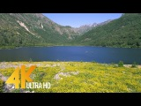 Carpet of Yellow Wildflowers in 4K UHD Nature Sounds &amp Bird Signing - Coldwater Lake Shores