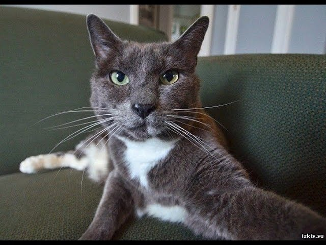 Смешные кошки и котята. Самое смешное видео про кошек!