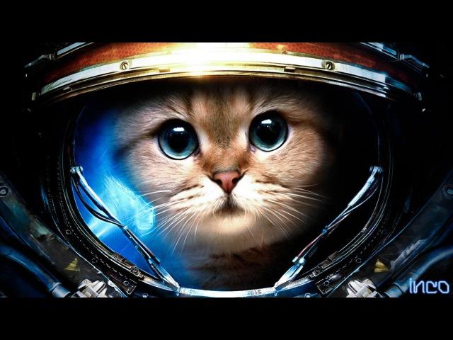 Кот перепугался Смешные коты Топ 10 Funny cats Top 10