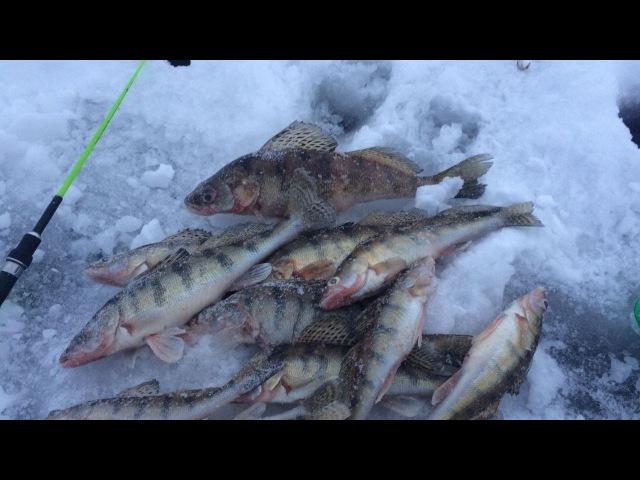 Зимняя рыбалка Вот это клёв Ловля берша на тюльку