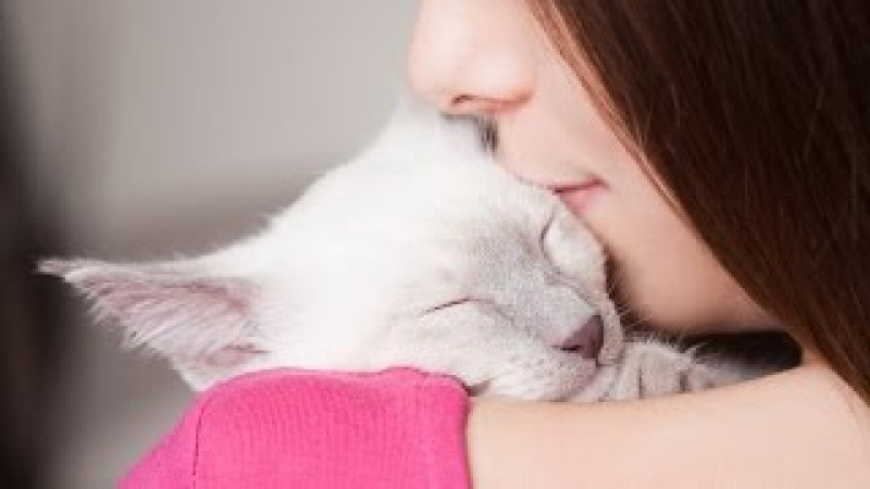 Cutest And Sweet Cats Hugging And Cuddling Videos Compilation 2016