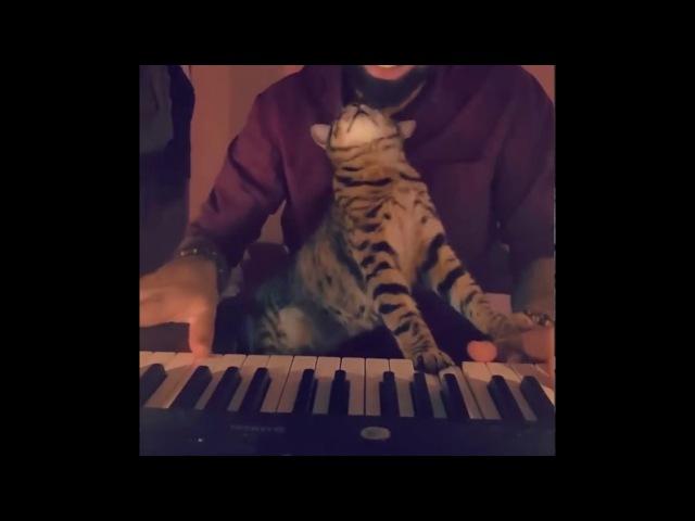 Cat loves music