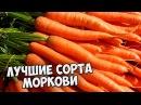 Семена моркови 🌱 Лучшие сорта моркови и новинки сезона 🌱 Агрофирма ГАВРИШ