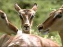 Животный мир Африки. Вверх до хвоста. Документальный фильм.
