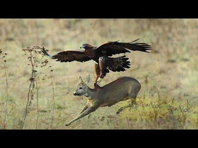 ТОП 5. Животные спасаются из лап хищников