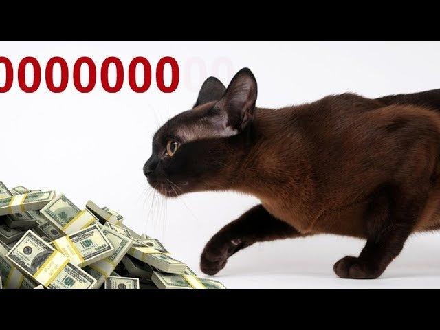 Кто вывозит Миллиарды за границу (Сказки про доллар 11)