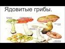 Ядовитые и галлюциногенные грибы
