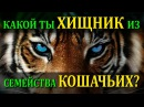 🐆 Какой ты хищник из семейства кошачьих? Кто ты ТИГР, СНЕЖНЫЙ БАРС, ПАНТЕРА, ГЕПАРД? Какие вы кошки?