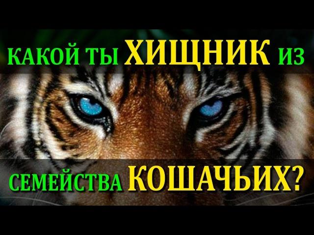 🐆 Какой ты хищник из семейства кошачьих? Кто ты ТИГР, СНЕЖНЫЙ БАРС, ПАНТЕРА, ГЕПА...