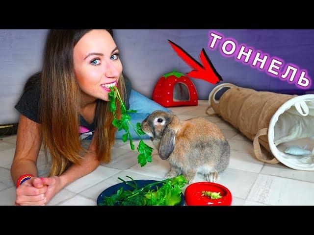 МОЙ ВЕЧЕР с Кроликом ТОННЕЛЬ В ДОМЕ КРОЛИКА ИГРАЕМ | Elli Di Pets
