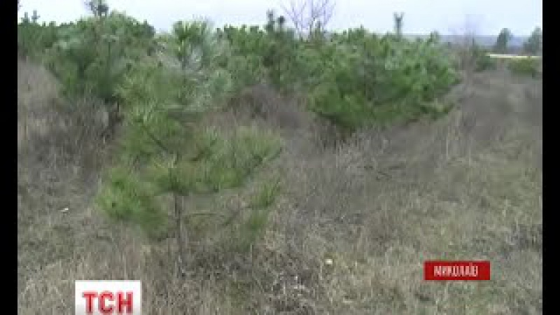 У Миколаєві бійці цивільного корпусу Азов будуть захищати ліс від ялинкових бр...