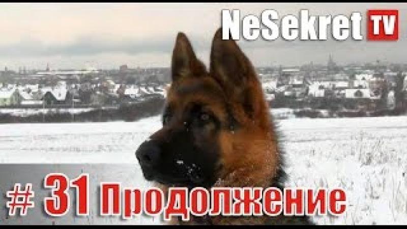 Собака обрела хорошего хозяина и дом. Продолжение спасения 31. Город Улан-Удэ.