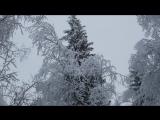 Прогулка по зимнему лесу