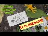 Вакансия Эколавка Шалфей