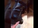 На конец то получили 👏👏 Ботинки philip💜plein , зима ❄️, кожа и мех внутри натуральный 💣фурнитура и качество люкс 💎👑