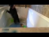 Кот упал в ванную, смешная подборка. Не засмейся, а у тебя не получится