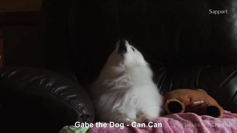 Топ 10 ремиксов Gabe The Dog _ RIPGabe