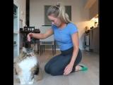 Тренировка с котом