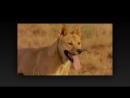 Твои весёлые друзья-зверята - 17 серия - Динго Дина