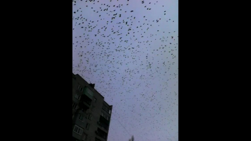 Перелётные птицы летят через микрорайон в Каменске-Шахтинском