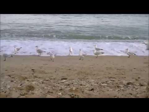 Шум волн и крики чаек | Одесса | The sound of waves and seagulls | Odessa