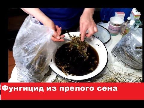 Фунгицид из ПРЕЛОГО СЕНА Часть 1 Приготовление прелого сена