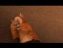 Кот из шрэка (Кот в сапогах три чертенка)