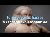 10 интересных фактов о человеческом организме