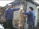 Курбан салыу 1996 йыл