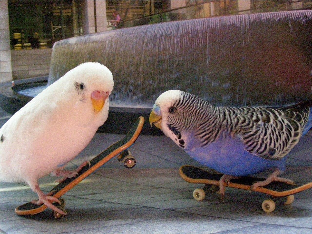 Домик для попугаев - самый шикарный: как сделать