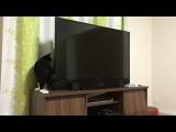 Schrodinger's TV Cat - Also Sprach Zarathustra