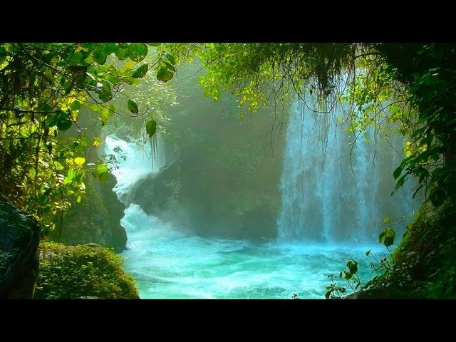 Tribal Jungle Music - Fountain of Youth