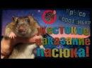 Жестокое наказание пасюка Ючики! (Wild Rats | Дикие Крысы)