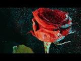 Martin Garrix &amp David Guetta - So Far Away (feat. Jamie Scott &amp Romy Dya) (Nicky Romero Remix)