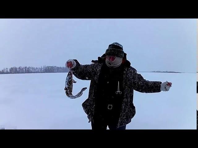 Зимняя рыбалка крупная щука на жерлицу берш и налим на тюльку окунь на балансир